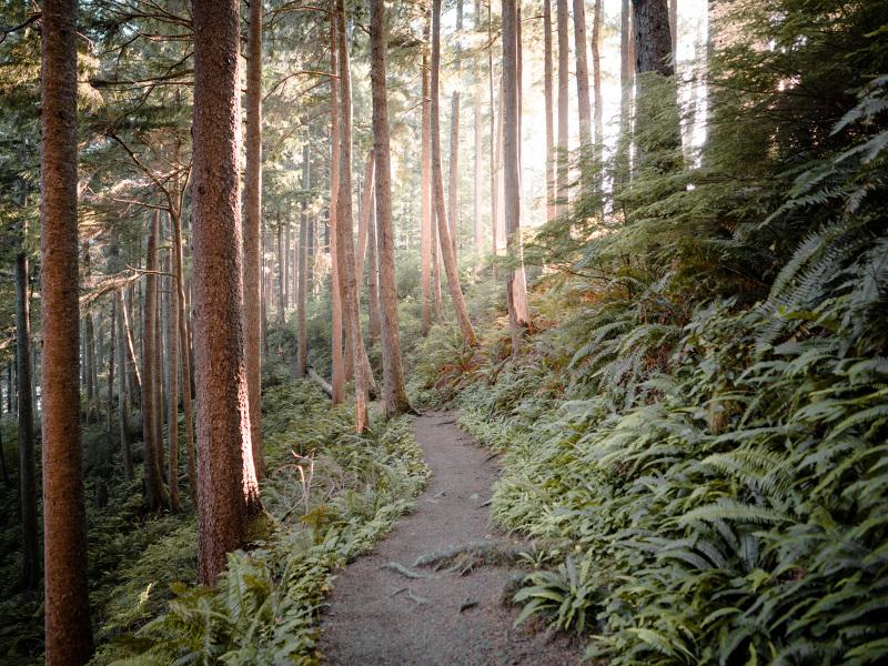 Cascadia-108_800
