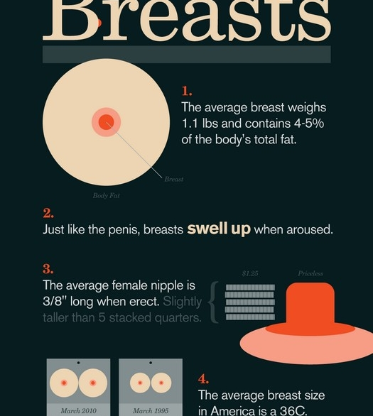 breasts_brueste_infografik_small