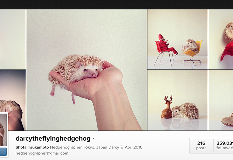 darcytheflyinghedgehog