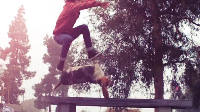 dogboarding_bydaniels