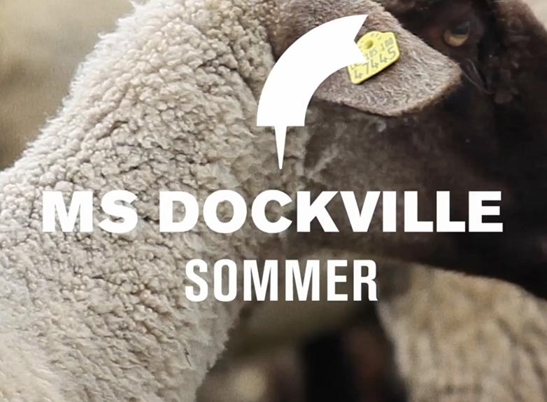 msdockville-festival-2013-hamburg-trailer